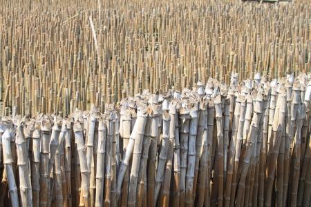 Wall bamboo