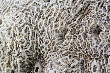 Brain coral close-up photo