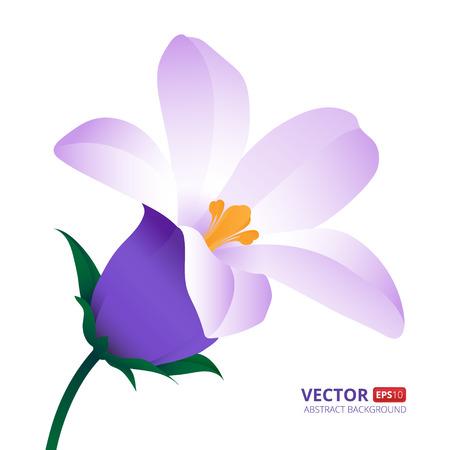 Spring flower isolated on white background. Illustration