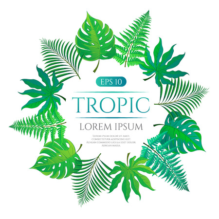areca: Tropical leaves round frame with place for text isolated on white background. Vector illustration in hand drawn cartoon style. Can be used for design your website or print publications and other.