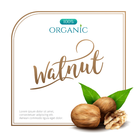 Vector frame of realistic walnut with leaves isolated on white background. Square frame for packaging design with place for your text and logo