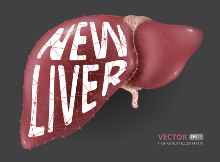 Realistic vector illustration of new human liver consisting of low-poly geometry, lines and dots.