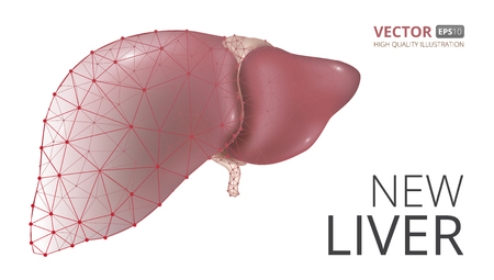 Realistic vector illustration of new human liver consisting of low-poly geometry, lines and dots isolated on white background.