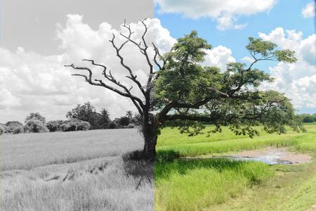 미스터리 나무는 또 다른 절반은 죽었고 나머지 절반은 아직 살아 있습니다.