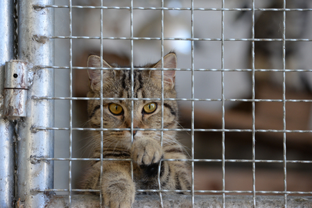 Homeless animals series. Tiny tabby kitten in a cage looking at camera out through the bars for freedom. Stock Photo