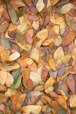 Dry leaves autumn background.texture of yellow leaves on the ground