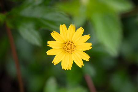 yellow flower head, natural background