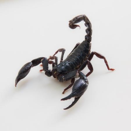 Black Scorpion photo