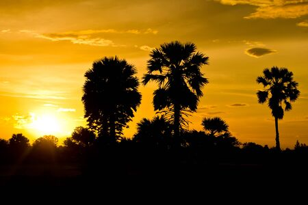 Silhouette of tree after sunset Stock Photo - 14347567
