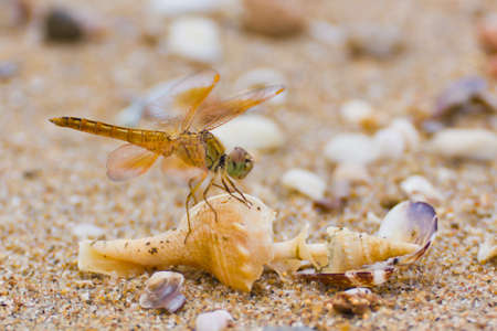 close up a dragonfly on the beach photo