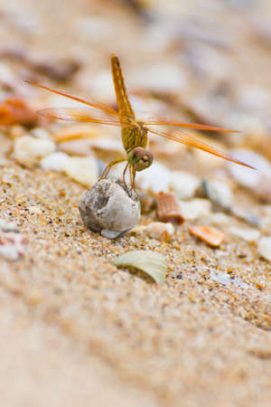 close up a dragonfly on the beach Stock Photo - 14537178