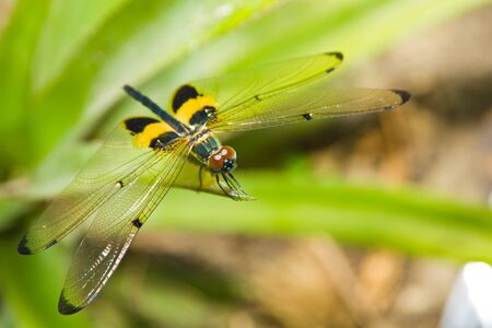 Close up of dragonfly on a leaf Stock Photo - 14631339