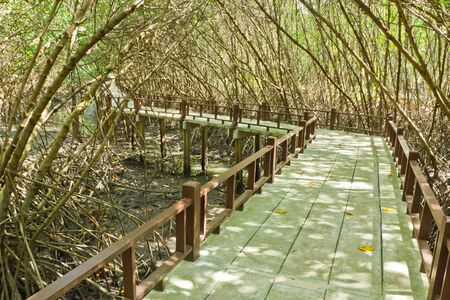 wooden path is boardwalk  in mangrove forest Stock Photo - 14734521