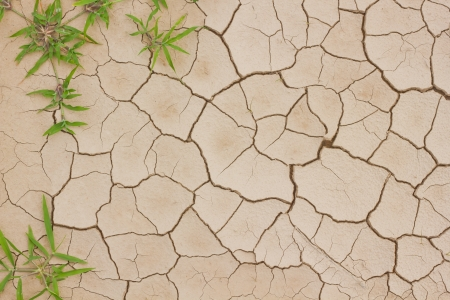 Plant growing from cracked earth texture Stock Photo