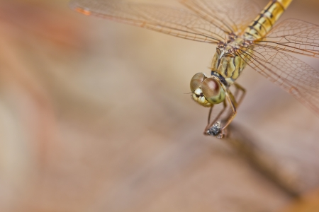 close up of dragonfly on branch photo