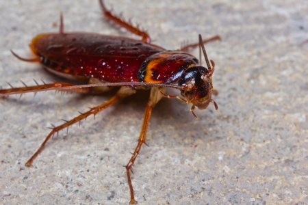 Close up of cockroach on floor Stock Photo