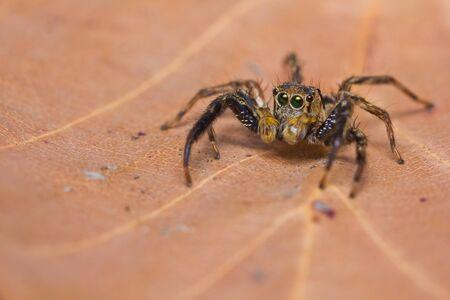 close up of jumper spider on leaf photo