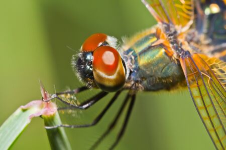 close up of dragonfly on branch Stock Photo - 14955624