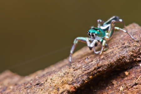 close up of jumper spider on branch photo