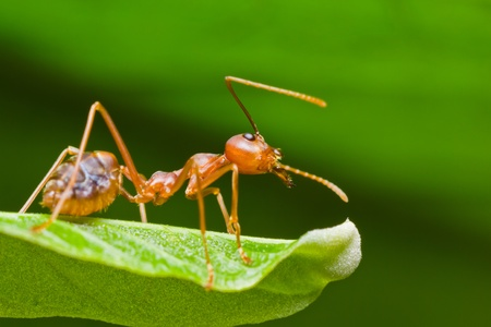 red ant in the nature photo