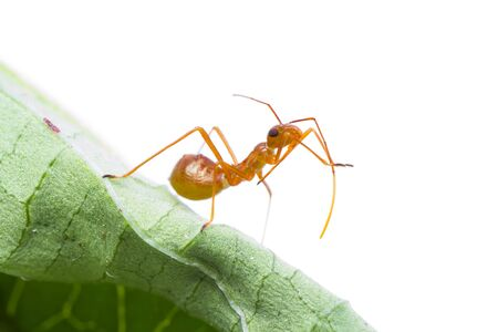 Macro shot of an assassin bug Stock Photo - 15387565