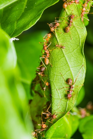 red ants on green leaf photo