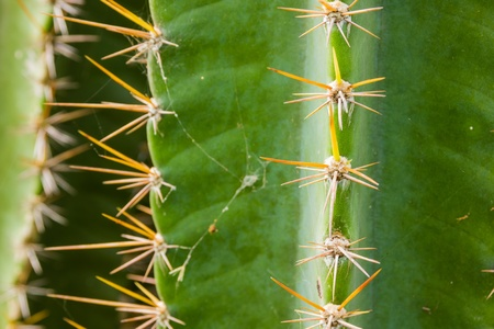 Green cactus plant with prickly Stock Photo - 16607923