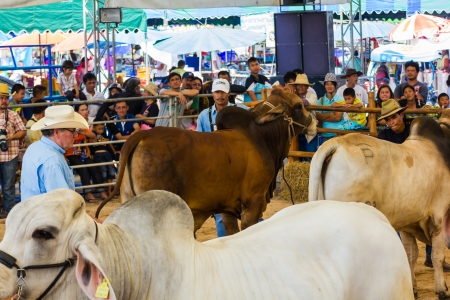 PRACHUAPKHIRIKHAN, THAILAND - DECEMBER 16 : Unidentified cows at competition of beauty Livestock Show 2012 on December 16, 2012 in Pranburi, Prachuapkhirikhan, Thailand