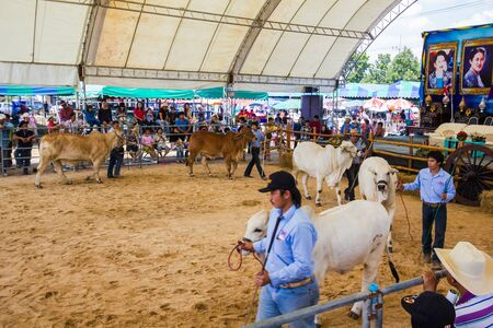 PRACHUAPKHIRIKHAN, THAILAND - DECEMBER 16 : Unidentified cows at competition of beauty 'Livestock Show 2012' on December 16, 2012 in Pranburi, Prachuapkhirikhan, Thailand