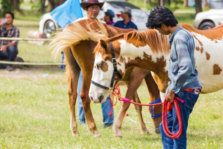 PRACHUAPKHIRIKHAN, THAILAND - DECEMBER 16 : Unidentified horse at competition of beauty Livestock Show 2012 on December 16, 2012 in Pranburi, Prachuapkhirikhan, Thailand
