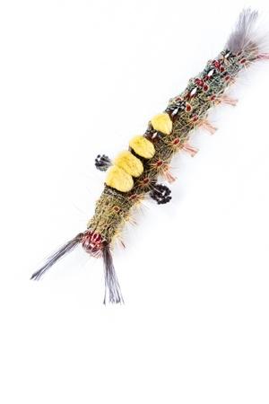 strange caterpillar with many venomous spines on white background Stock Photo - 17072908