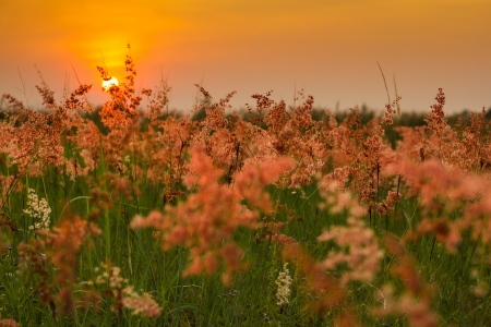 Grass flower and sunset background photo