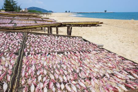 Dried squid at the fishing village Thailand photo