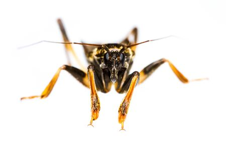 Close up of assassin bug on white background photo