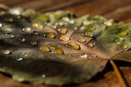 Close up of water drops on dry leaves photo