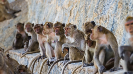 monkey family is sitting on the wall
