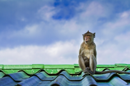 Monkey sitting on the roof and sky background photo