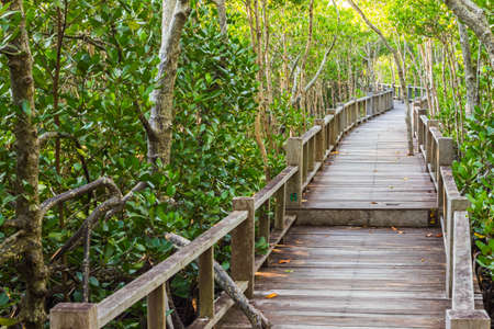 wooden path is boardwalk  in mangrove forest photo