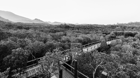 Black and white of wooden path is boardwalk  in mangrove forest photo