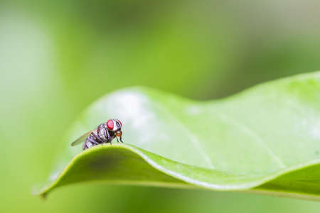 Housefly resting on green leaf Stock Photo