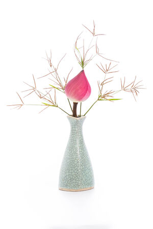 Lotus flower in vase on white background photo