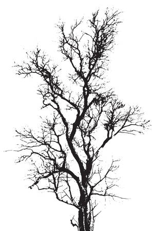 Silhouette the tree background Vector