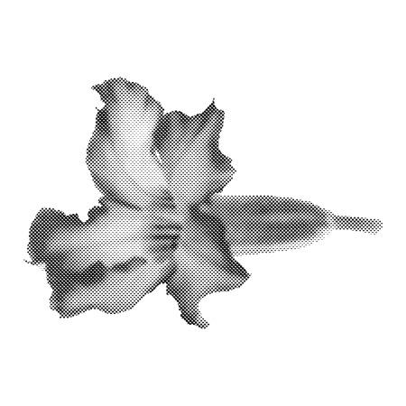 azal�e: Demi-teinte Desert Rose Fleur, Vector Design illustration Illustration