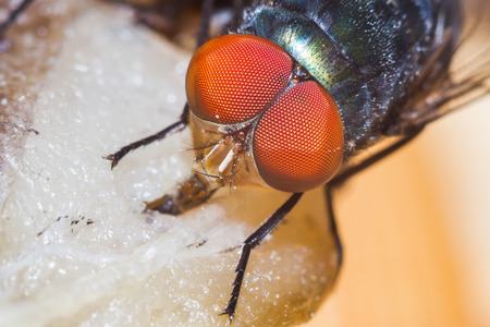insect: Extreme macro shot the eye of insect fly
