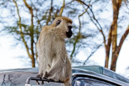 The Monkey Stock Photo - 12423632