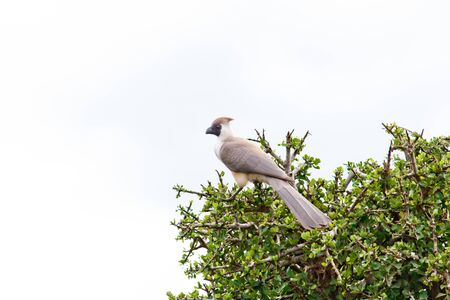 lake naivasha: Bird on the lake Naivasha