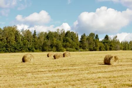 Hayfield and haystack photo