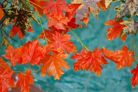 japanese fall foliage: Autumn Orange Leaves
