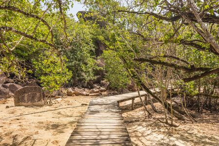Path to the beach through mangrove forest in Dominican Republic Stock fotó
