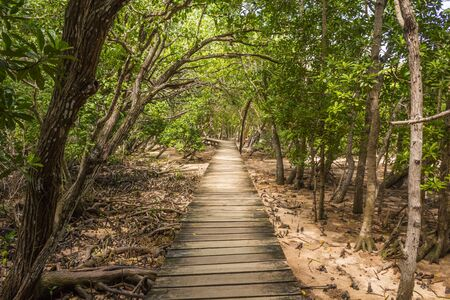 Path to the beach through mangrove forest Stock fotó